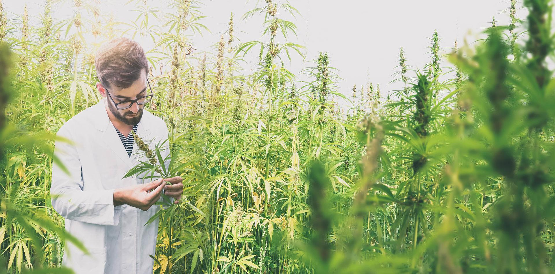 Scientist - Marijuana